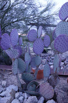 One of my favorite cacti