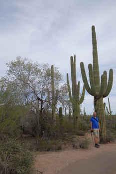 The Saguaro Cactus