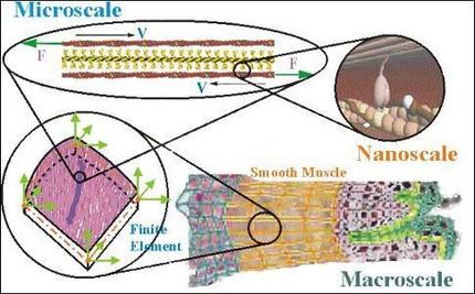 Multi-Scale Modeling