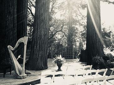 Harp in Redwoods
