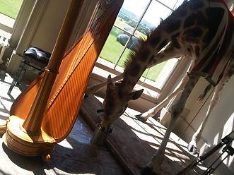 Sarah Goss Weddig Harpist Aynho Park Giraffe