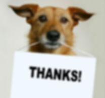 Testimonials about Steves dog training