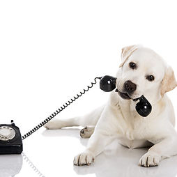 Contact details for Steves Happy dogs training