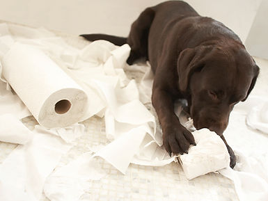 Dog behavioural problem training