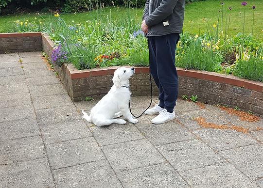 Puppy training in Woolmer Green