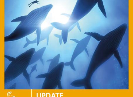 Le balene tornano e incantano, intonano l'inno alla vita