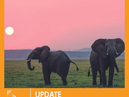 Emergenza COVID-19, elefanti scatenati in salsa Thai