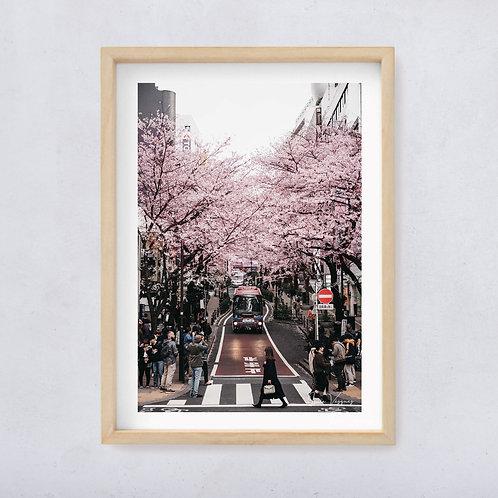 Sakura in Shibuya