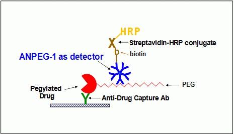 ANPEG-1 Antibody
