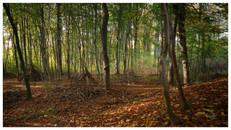 Wandern mit den Naturfreunden Eichgraben