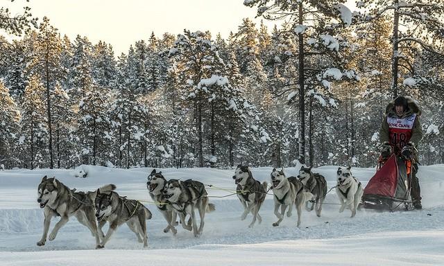 Foto: Nordvikens kennel