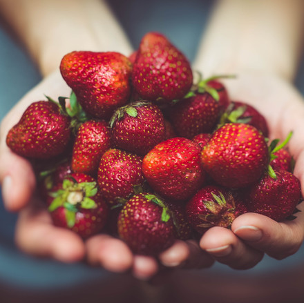 Ohope Local Wild Food Challenge strawberries
