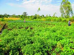 Lush Farm B
