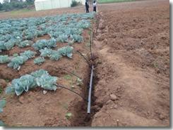 Irrigation lines added