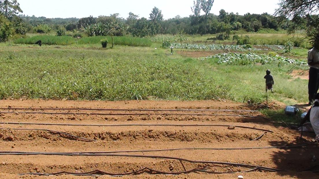 YFT farm in Yogo
