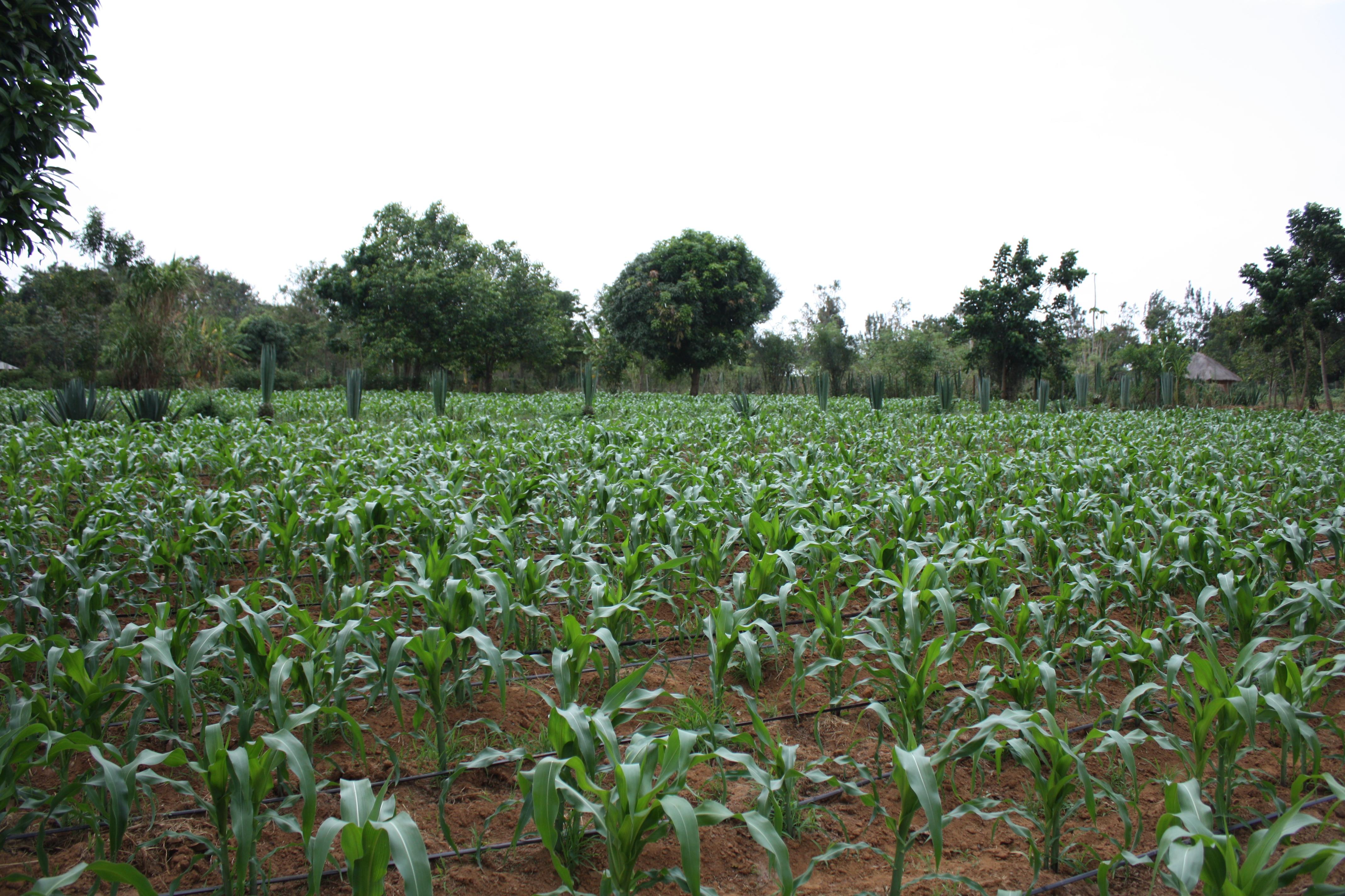 Yogo YFT Farm