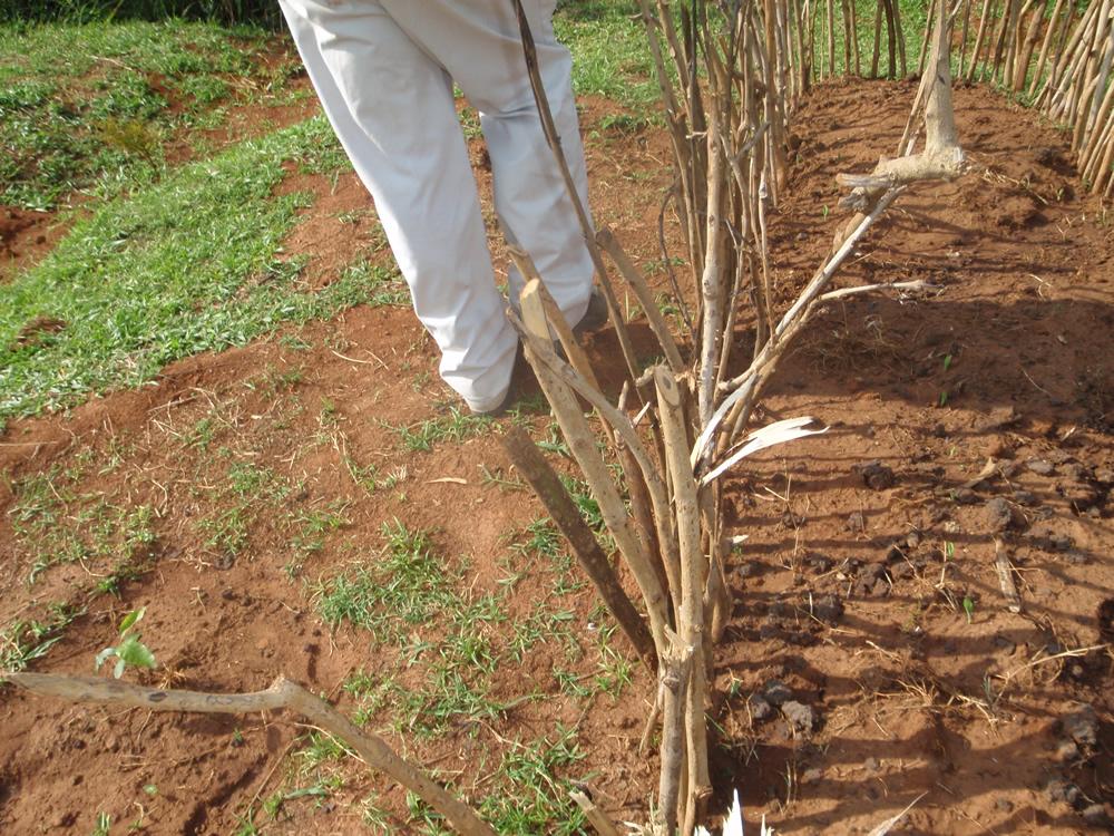 BEFORE (2008) Depleted Soil