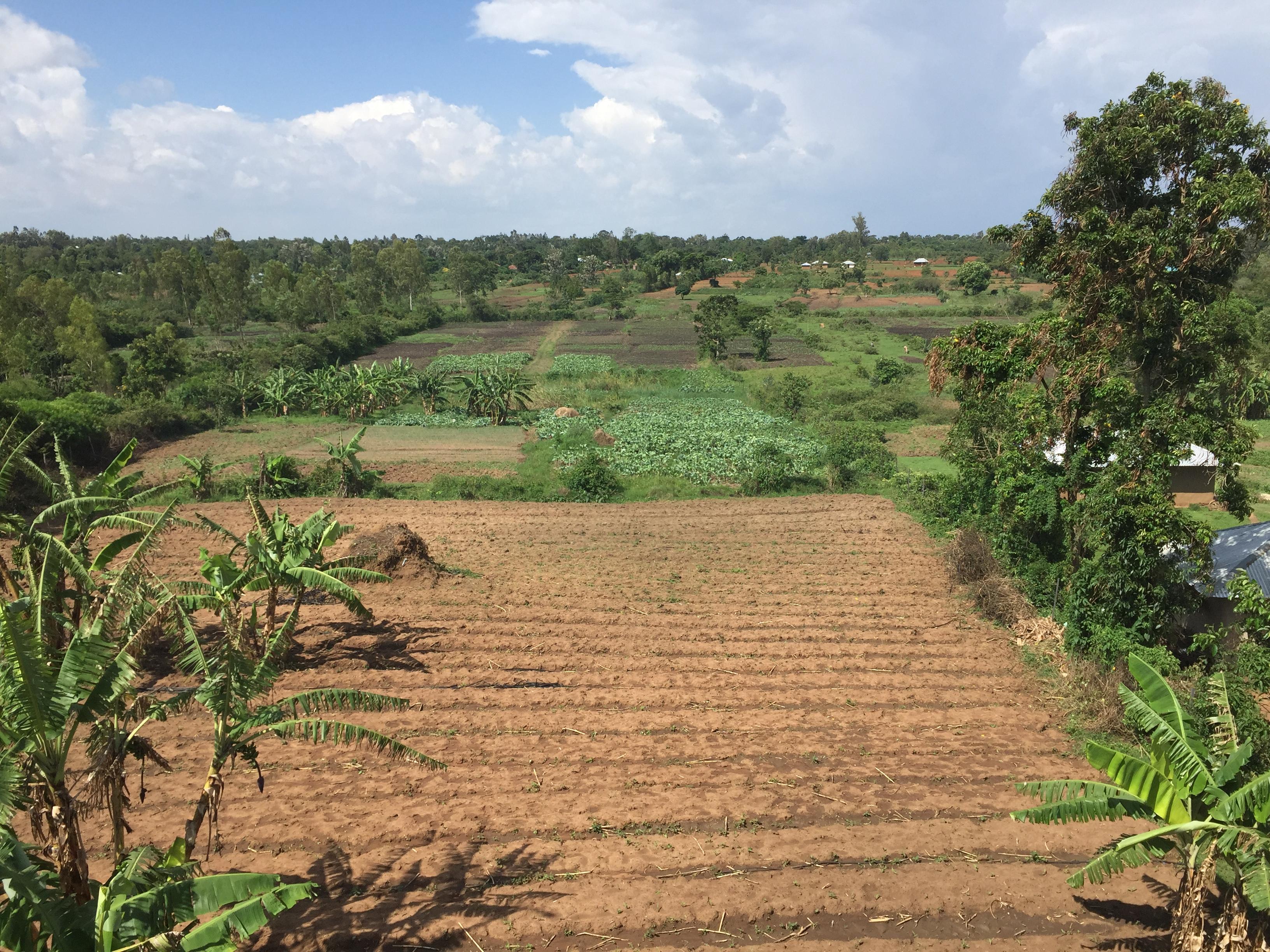 YOGO FARM OVERHEAD