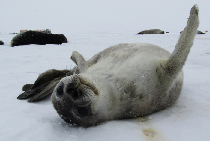 A Day in the Life of a Seal Researcher