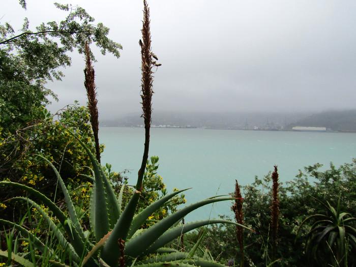 An Extended Kiwi Layover