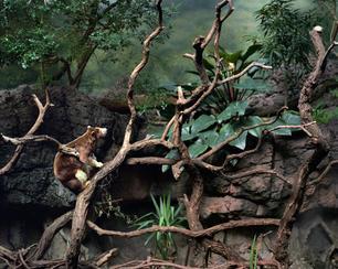 wildlife dioramas tres