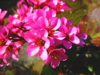 次々と花開いています