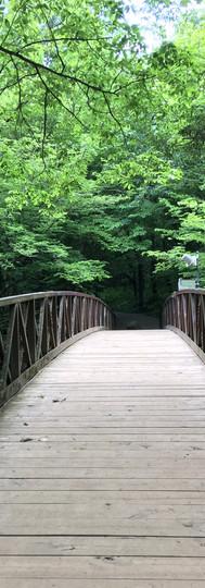 A quiet walk in the woods