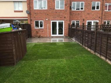Real turf lawn