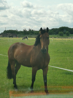 Horses as beautiful as this need keeping from roaming.