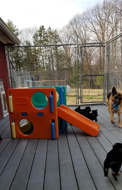 Pups and mom on decl