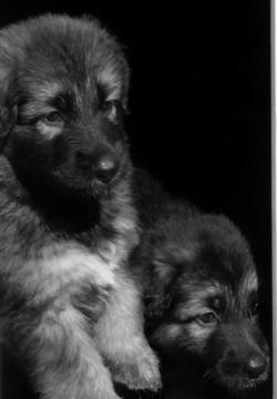 puppies in doorway.jpg