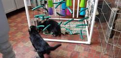 Pups exploring adventure box