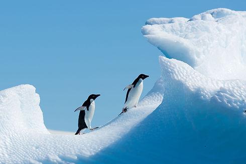 פינגווינים.jpg