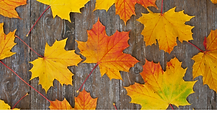 Fall Banner 4.png