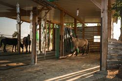 Pferde sind Herdentiere.