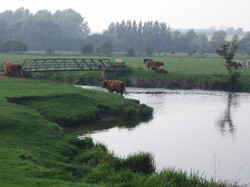 Sudbury Water Meadows