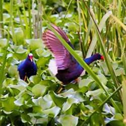 BirdingEL2
