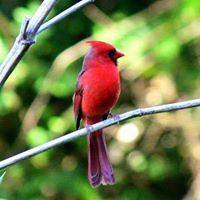 BirdingEL3