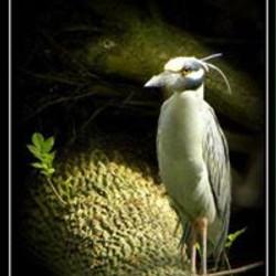 BirdingEL8