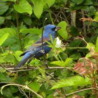 BirdingEL4