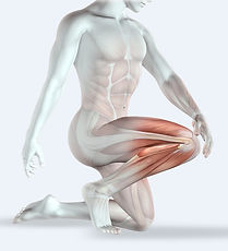 Leg muscles Clive Witham Gua sha guide