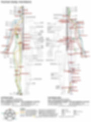 Human Body Channels Clive Witham Gua sha Guide