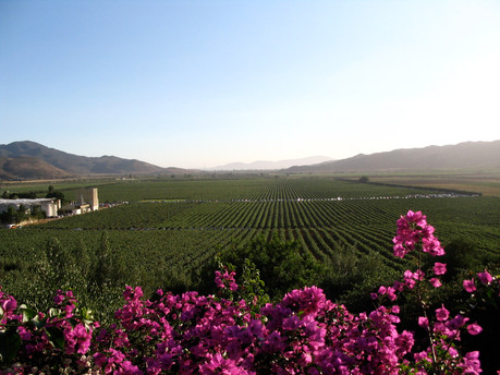 ¿Qué hacer en Valle de Guadalupe y Ensenada?