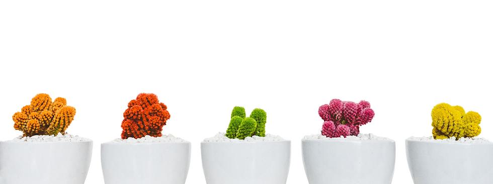 Zelfvertrouwen cactus.png