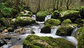 809300-free-creek-wallpaper.jpg