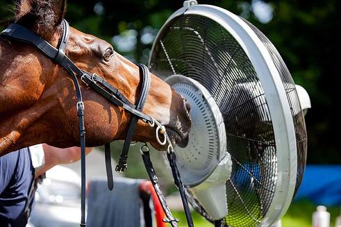 misting fan 1.jpg