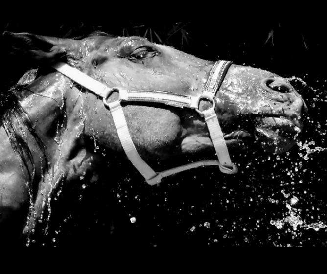 black horse (1).png