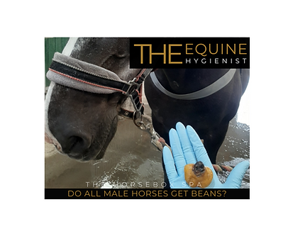 Q&A do all horses get beans (3).png