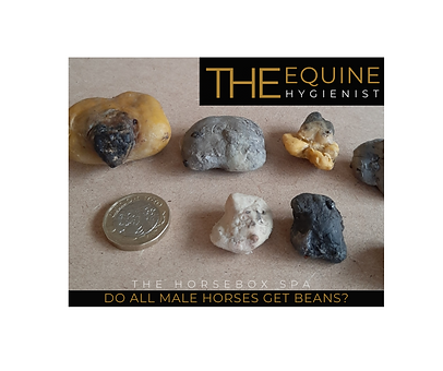 Q&A do all horses get beans (2).png