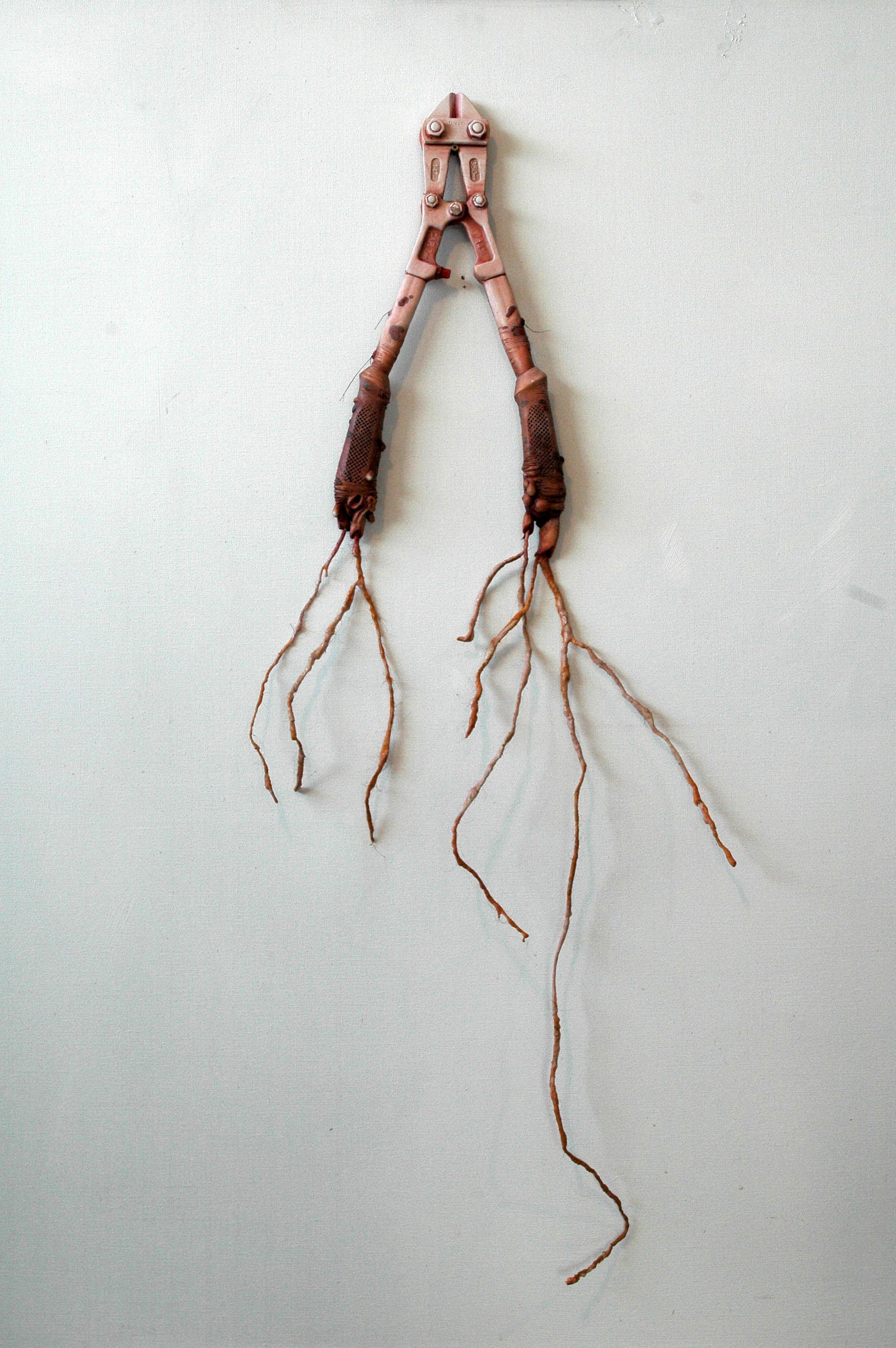 Pince Y, 2005